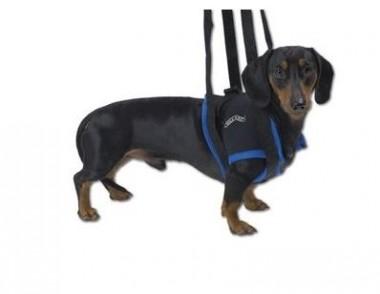 Gehhilfe für Hunde
