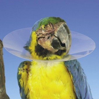 Halskragen für Vögel