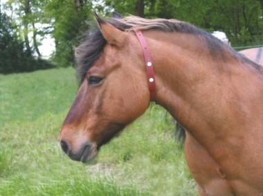 Insektenschutz-Halsband für Pferde