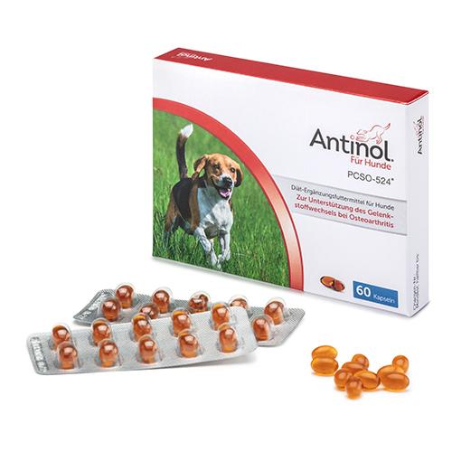 Antinol für Hunde