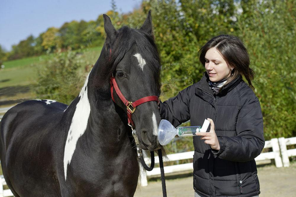 RC Animal Chamber Pferd