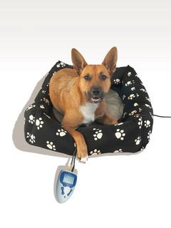 Vet-MagMobil für kleine Hunde und Katzen