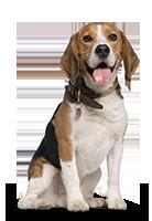 Tiershop Kategorie Hunde