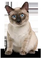 Tiershop Kategorie Katzen