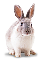 Tiershop Kategorie Kleintiere