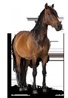 Tiershop Kategorie Pferde