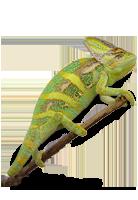 Tiershop Kategorie Reptilien