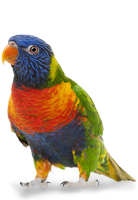 Tiershop Kategorie Vögel